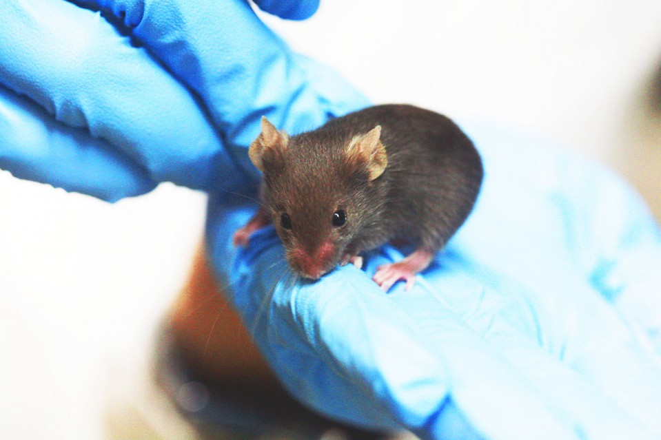 Photo of gloved hands holding ab mouse