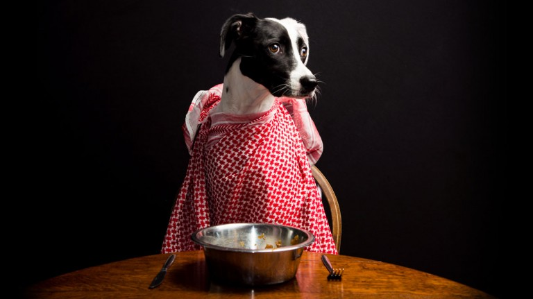 A dog, ready to eat