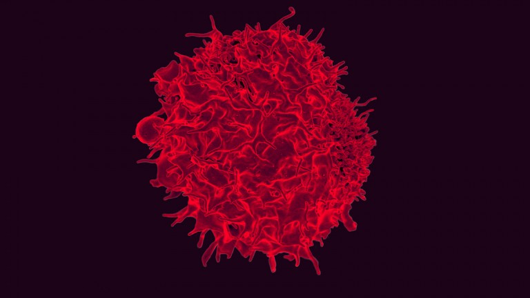 T-cells like this can be engineered to fight cancer.