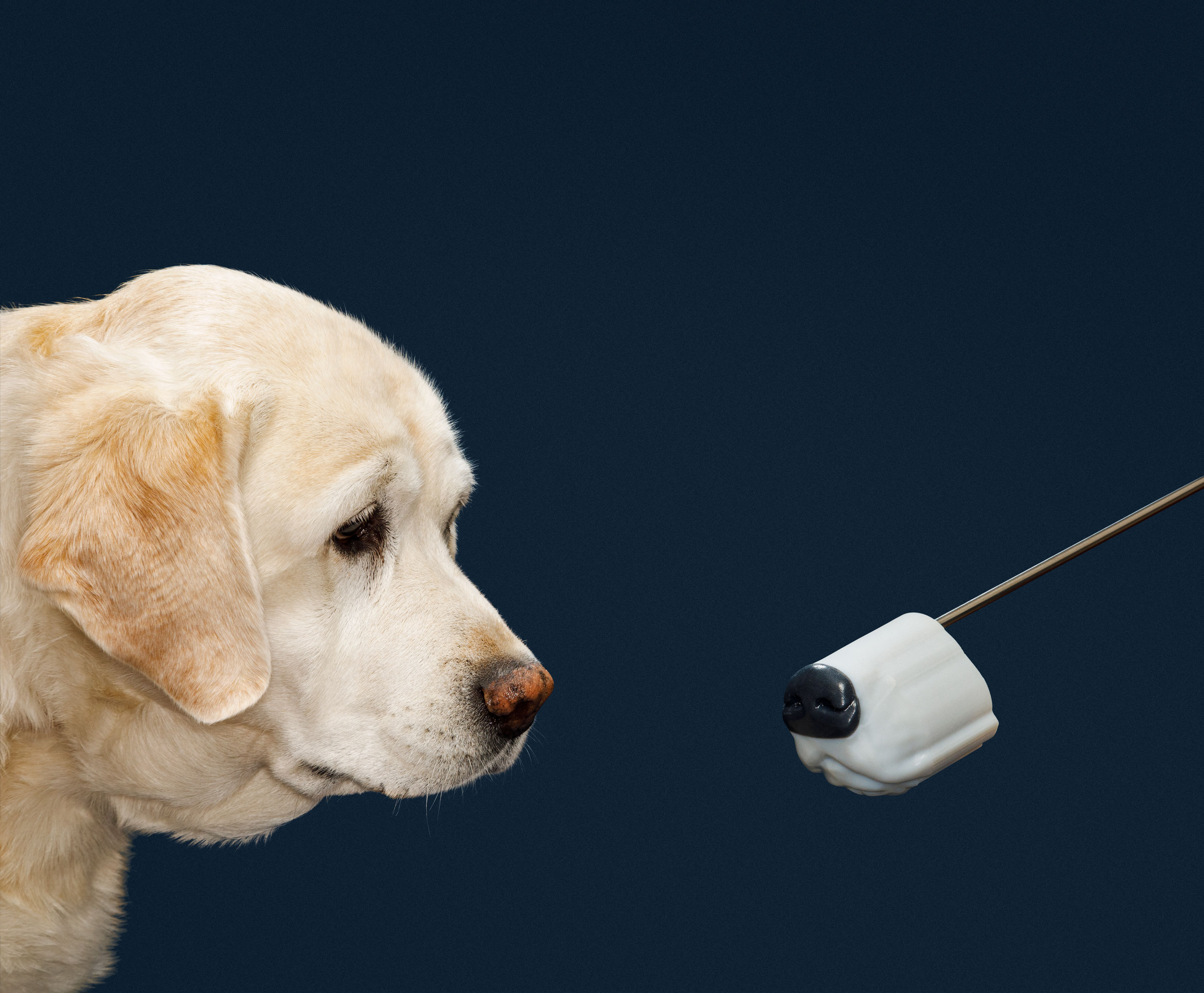 Why explosives detectors still can't beat a dog's nose