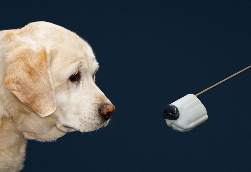 Golden retriever and artificial dog snout