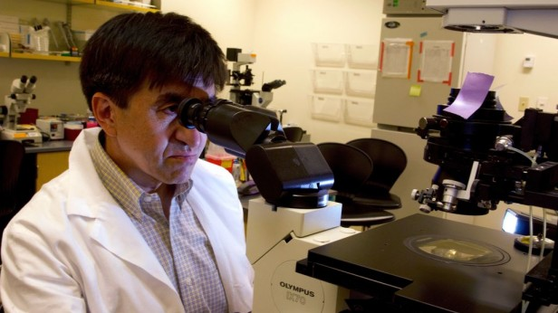 Image of Shoukhrat Mitalipov looking into a microscope