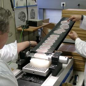 researchers slice a brain
