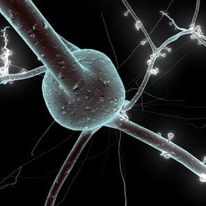 a 3D model of a neuron
