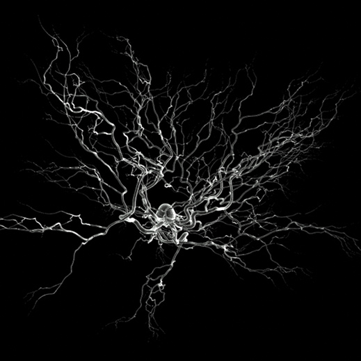 artist's rendering of a neuron