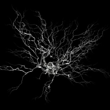 artist's rendering of a neuron