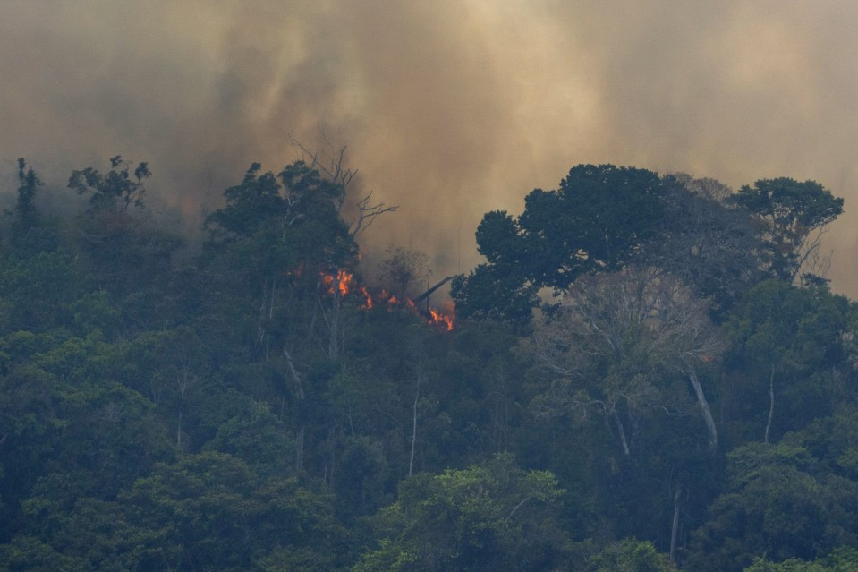 Photo of the Amazon rainforest wildfire