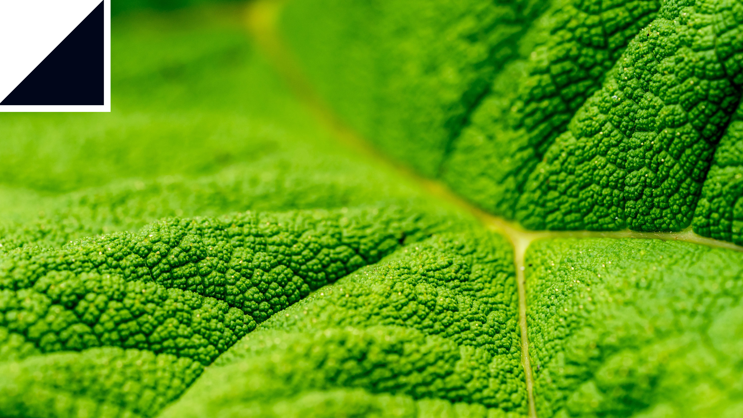 How a Newton's cradle for photons could reveal the secrets of photosynthesis