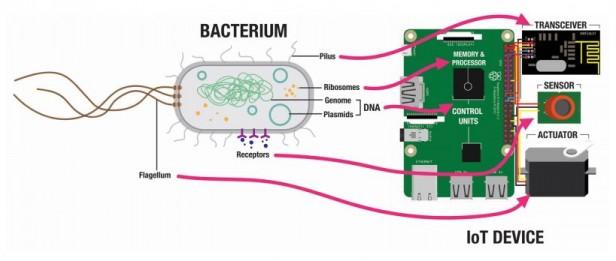 Bacterial IoT
