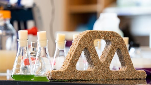 These living bricks use bacteria to build themselves