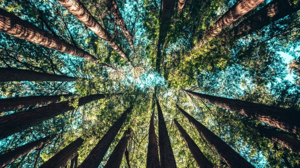 """A """"Trillion Trees"""" is a great idea—that could become a dangerous climate distraction"""