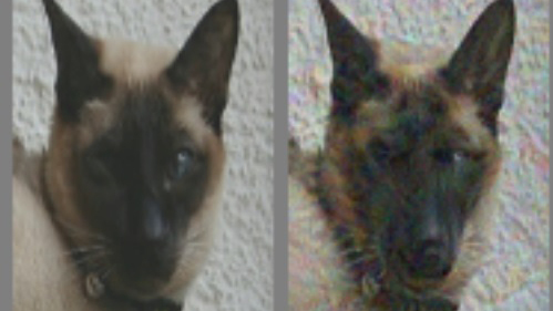 Photo of a cat, next to the same photo of the cat that's been manipulated to look more like a dog