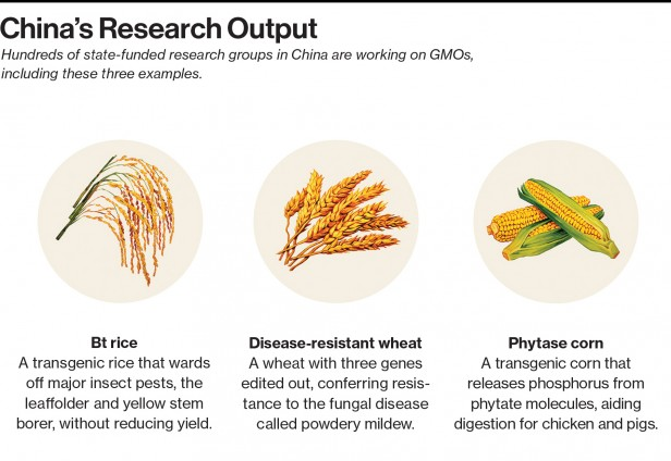 China's GMO Stockpile - MIT Technology Review