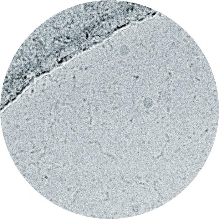Cryo-EM generated image