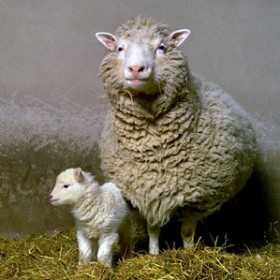 Dolly the sheep and her first-born offspring, Bonny.