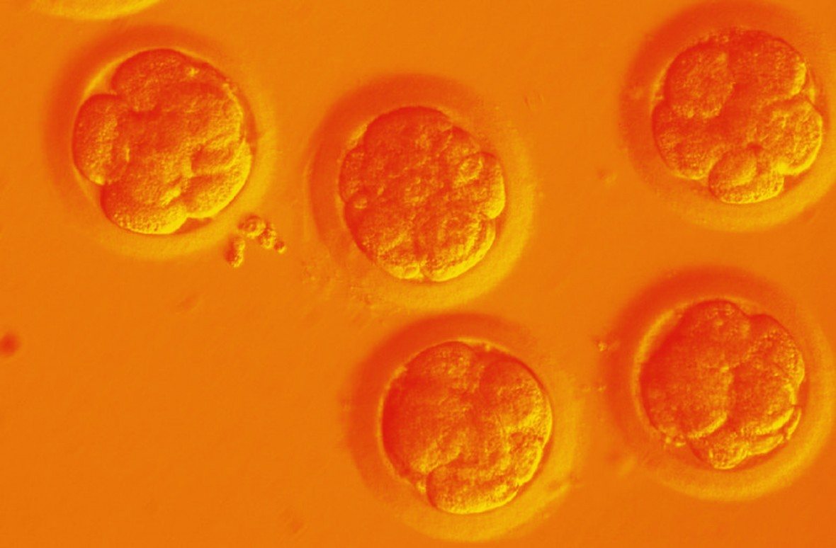 EXCLUSIVE: Chinese scientists are creating CRISPR babies
