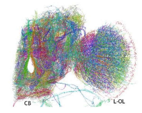 First 3-D Map of a Fruit Fly\'s Brain Network - MIT Technology Review
