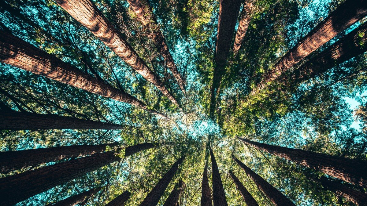Planting more trees could suck up a huge share of carbon emissions