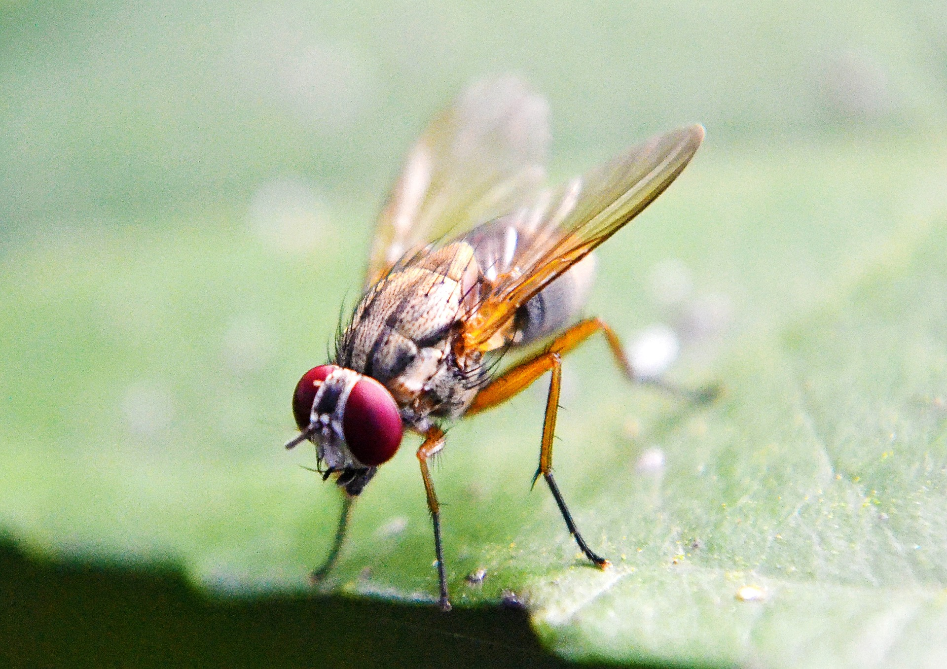 "Brain signals can reveal how ""awake"" a fly's brain is"