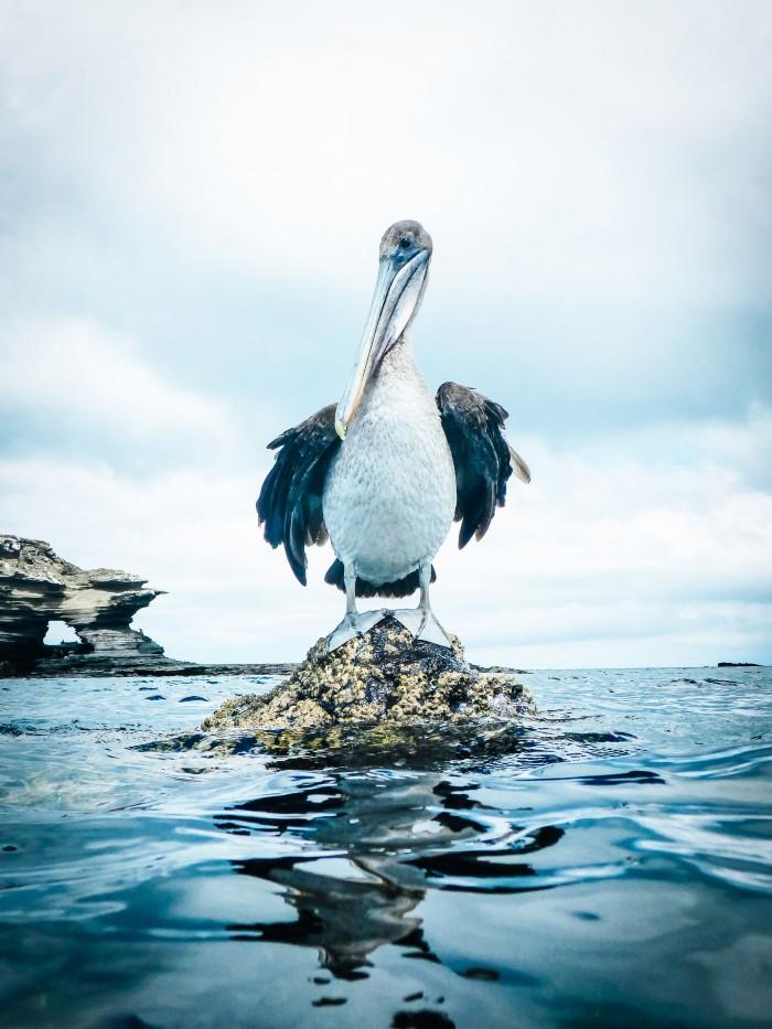 sea bird in the Galapagos