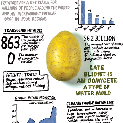 GMOs Could be an Important Tool in Feeding the World | MIT Technology Review