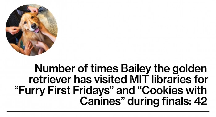 Bailey therapy dog stat
