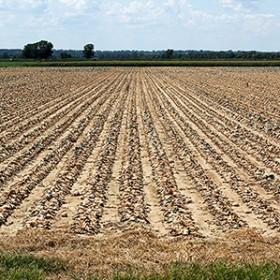 crop acreage
