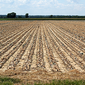 crop acreage