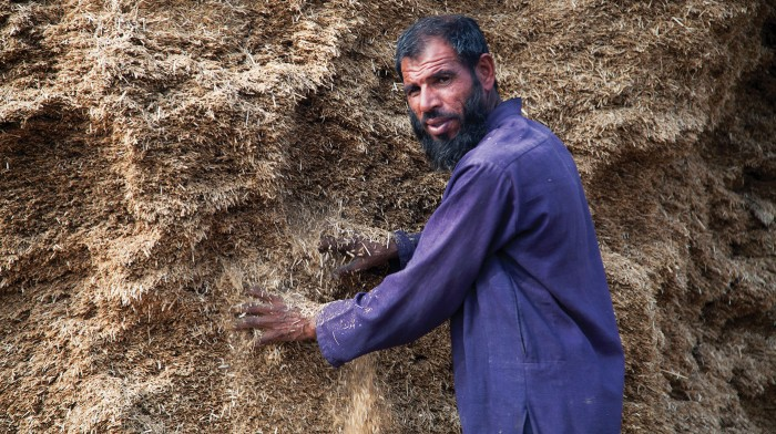 An image of a farmer in Pakistan