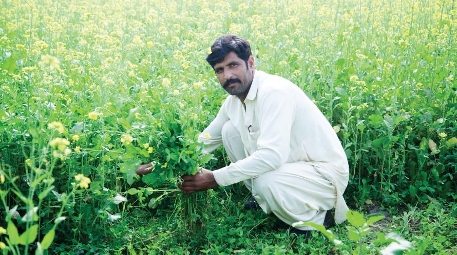 An image of a farmer in Pakistan