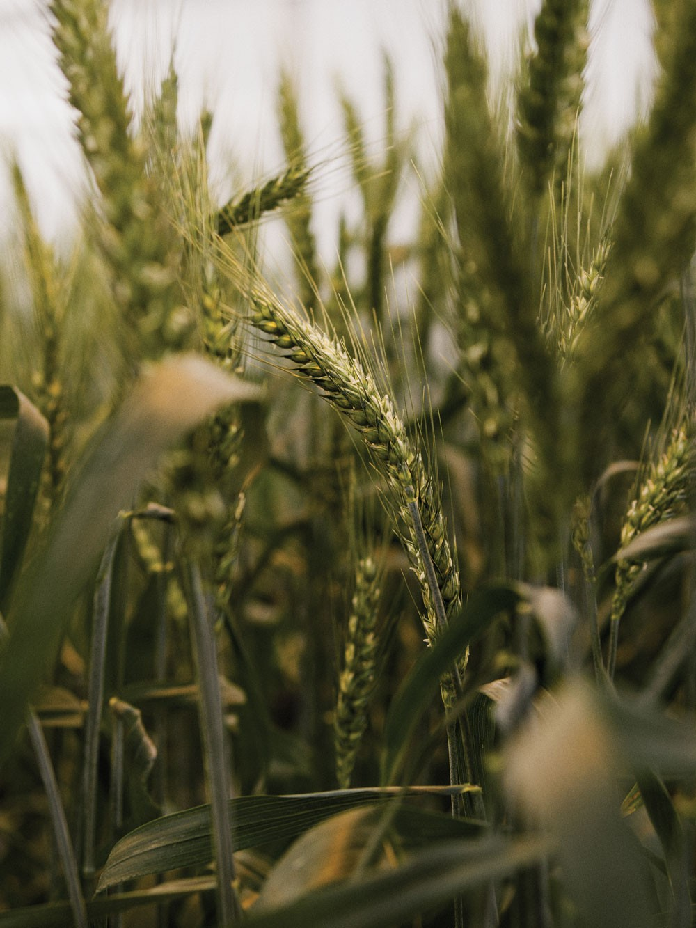 These Are Not Your Father's GMOs