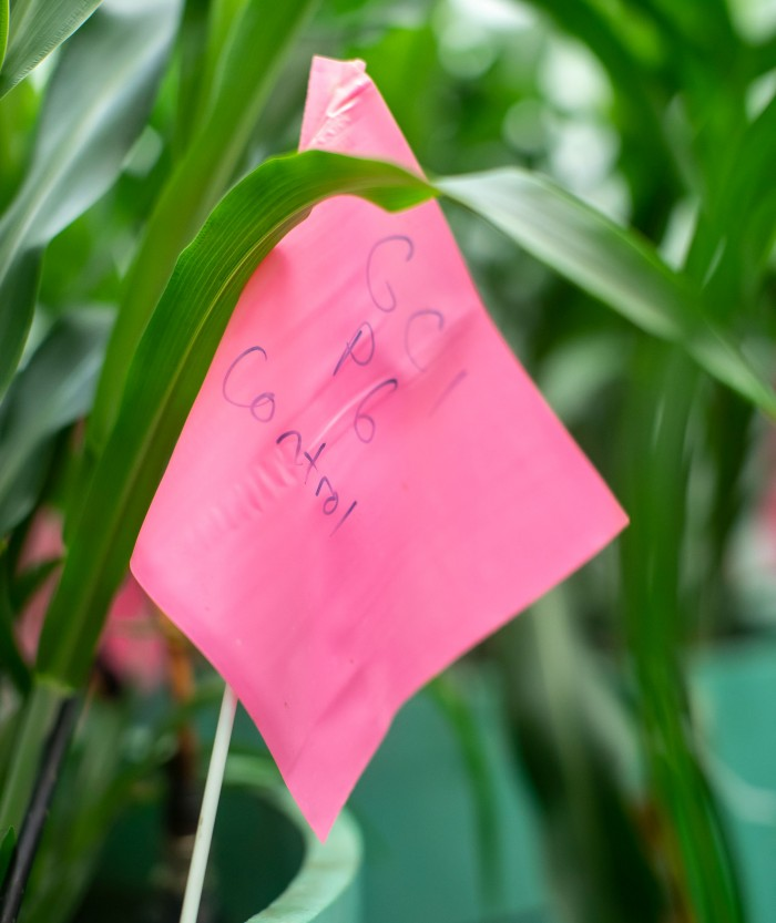 A pink crop flag labeled with condition specifications