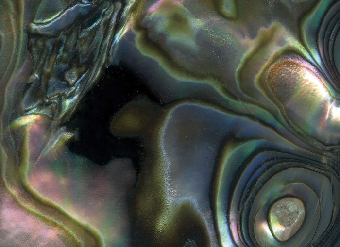 Close-up of an abalone shell.