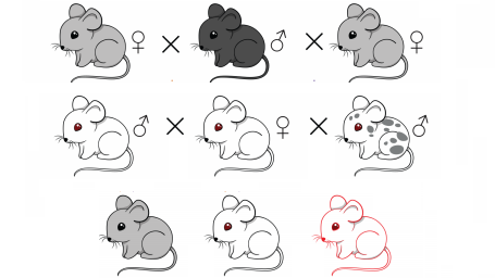 Mice with a gene drive