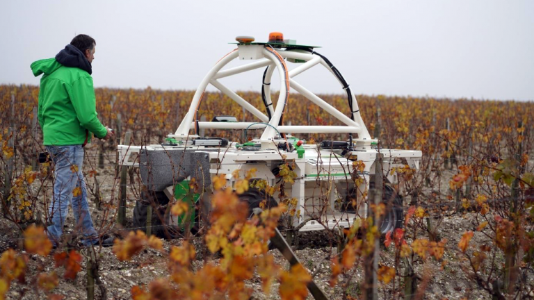 Traditional winemakers are starting to use robots.