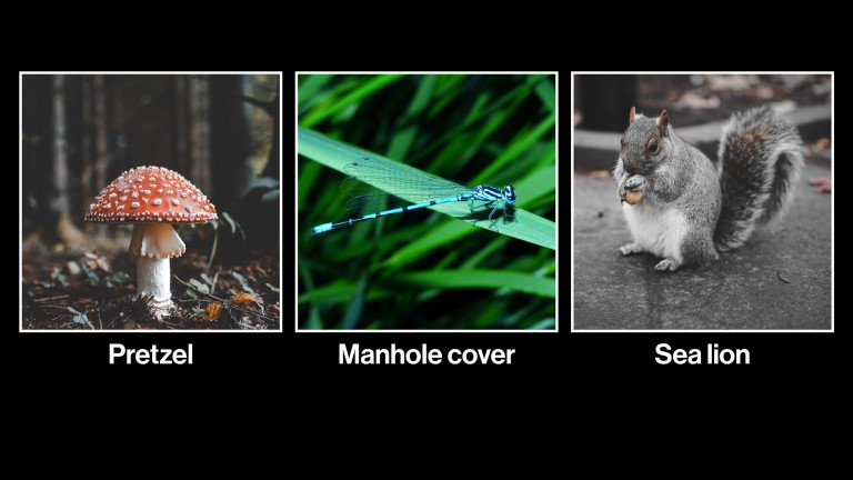 photograph showing a mushroom, dragonfly, and squirrel, all mislabeled as pretzel, manhole cover and sea lion