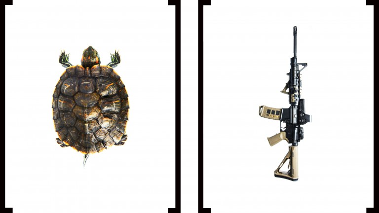 A turtle and a rifle