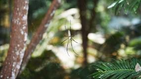 Photo of spider