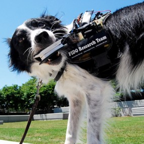 dog with wearable device