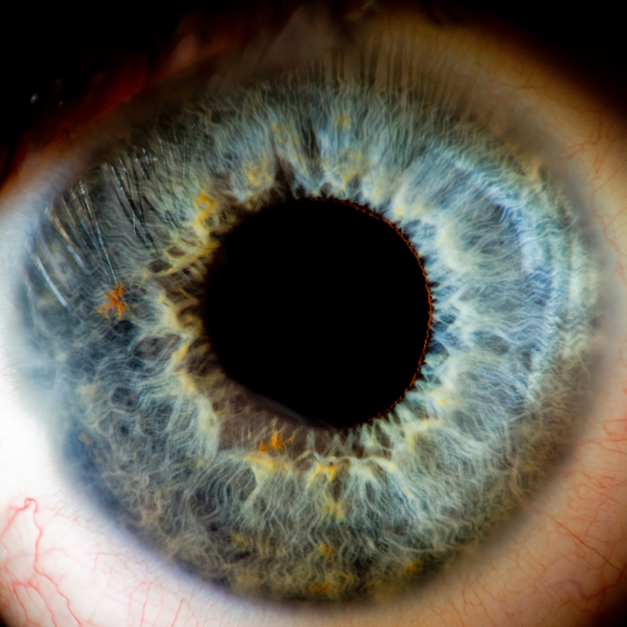 What Scientist First Determined That Human Sight