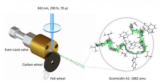 Quantum interference of biomolecules