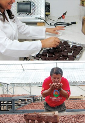 chocolate in the greenhouse and the lab
