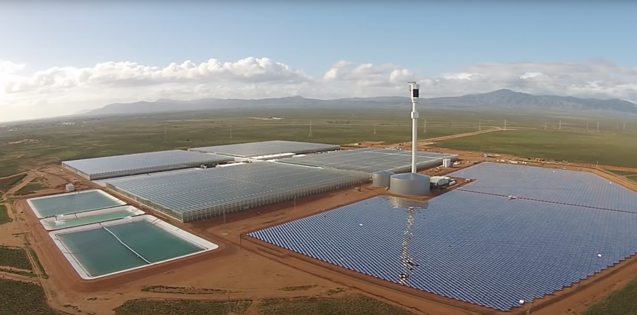 A Desert Full of Tomatoes Thanks to Solar Power and Seawater