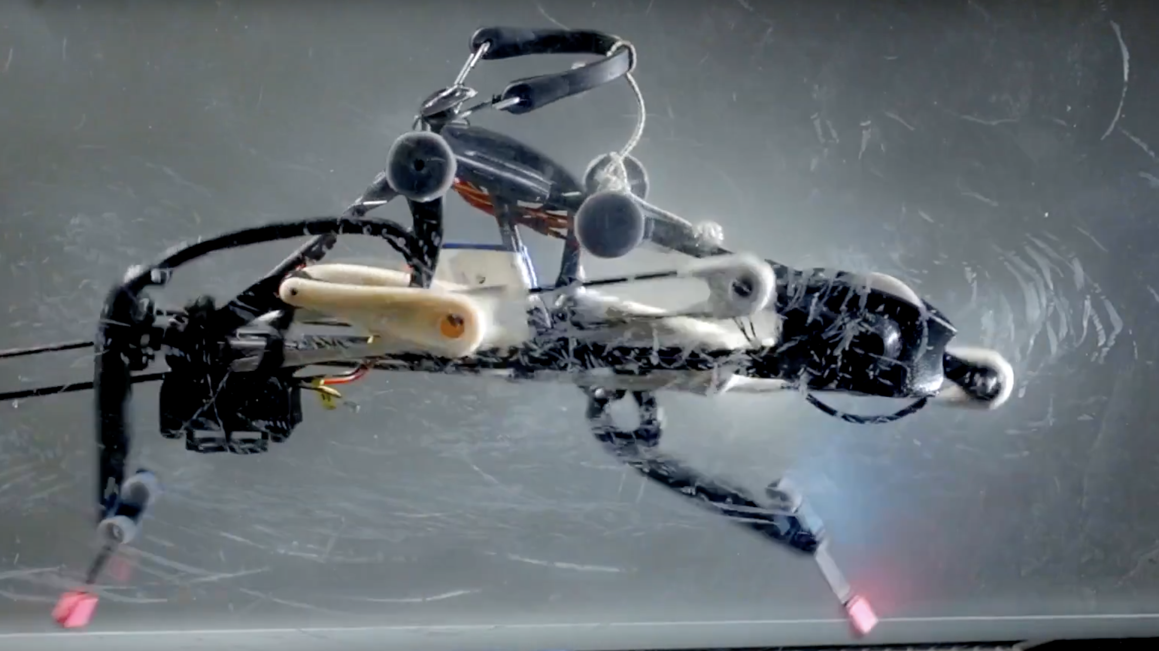 This ostrich-inspired robot is pushing the limits of legged locomotion