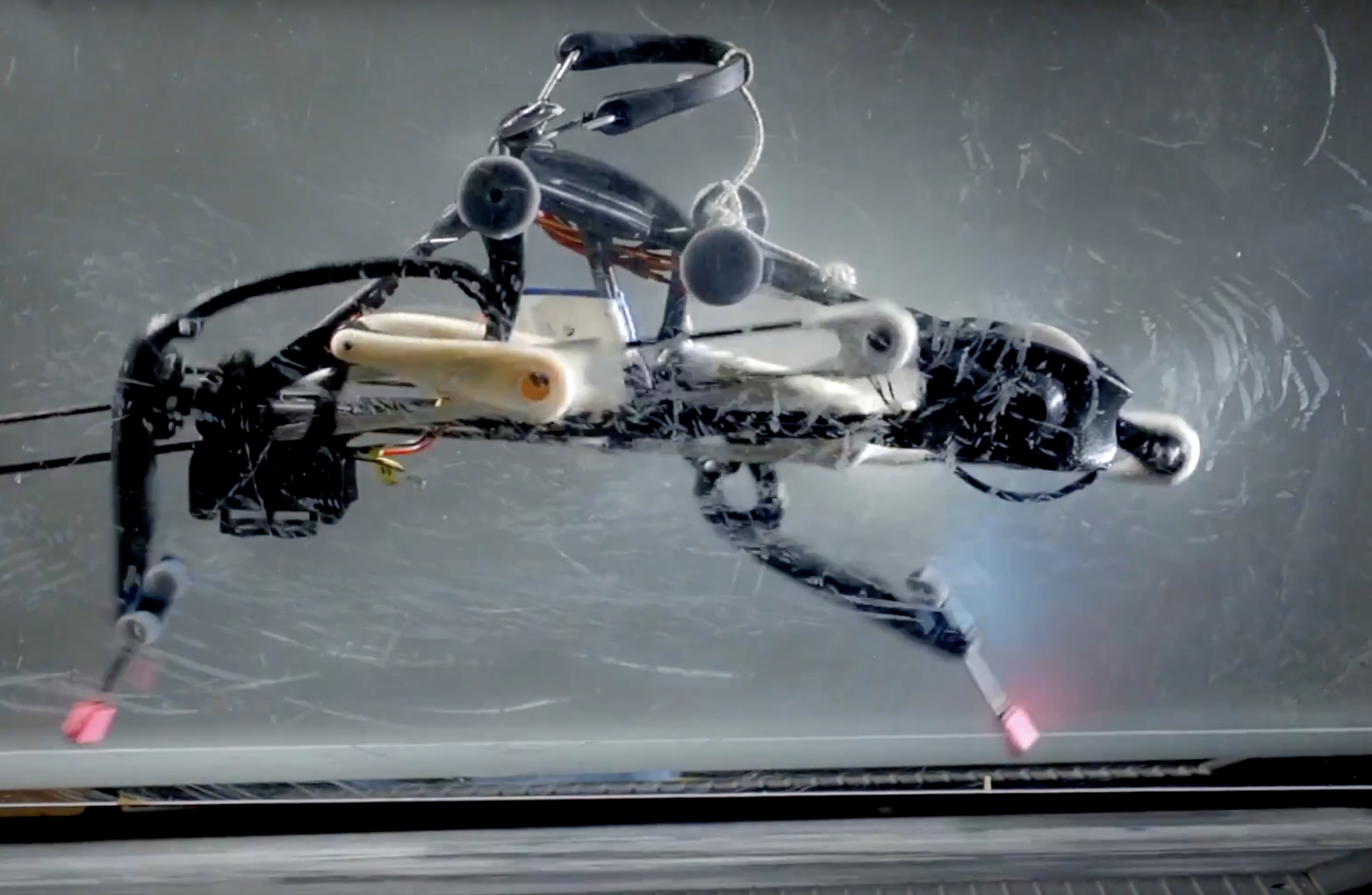 An Ostrich-Like Robot Pushes the Limits of Legged Locomotion