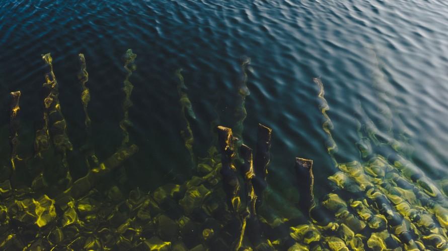 image of seaweed in ocean water