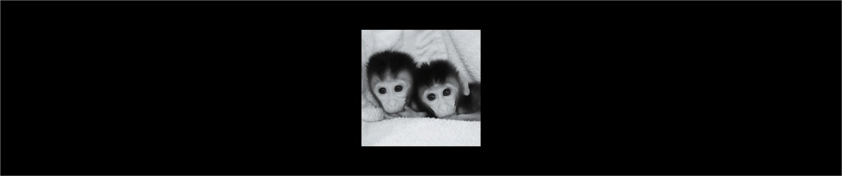 twin infant macaques