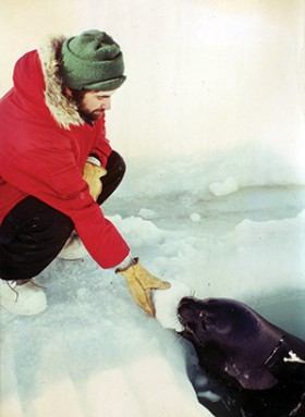 Zapol offers a chunk of ice to a thirsty Weddell seal