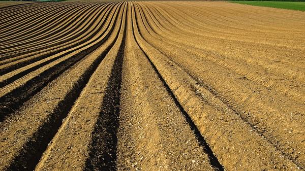 An image of a farm field