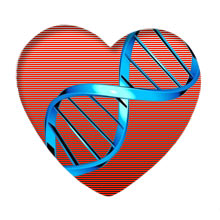 Image result for heart disease genes